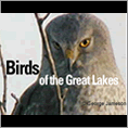 Birds of the Great Lakes